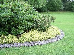 aronia aroniabeere pflanze und wirkung kennen lernen. Black Bedroom Furniture Sets. Home Design Ideas
